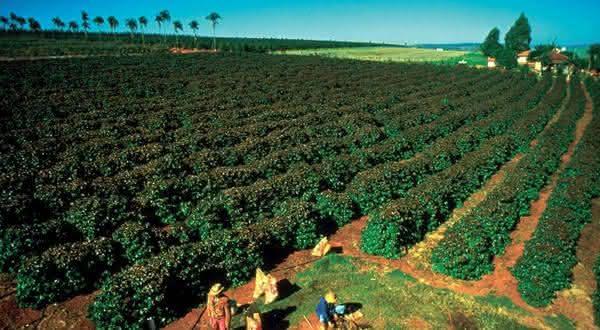 vietna entre os maiores produtores de cafes do mundo