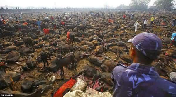 500 mil animais entre as coisas bizarras feitas em nome da religiao