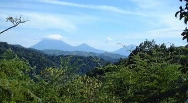Eastern Afromontane entre as florestas mais ameacadas do mundo