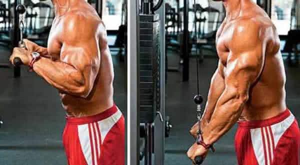 empurra fatos interessantes sobre o sistema muscular