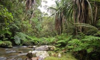 Top 10 florestas mais ameaçadas do mundo