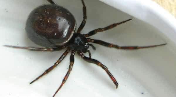 aranha entre os animais que podem sobreviver mais tempo sem se alimentar
