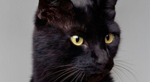 Blackie entre os animais mais ricos de todos os tempos