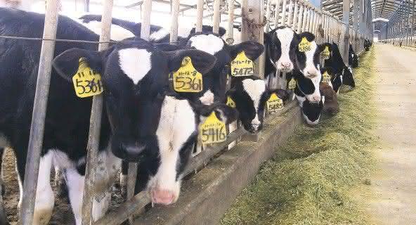 China Modern Dairy 2 entre as maiores fazendas do mundo