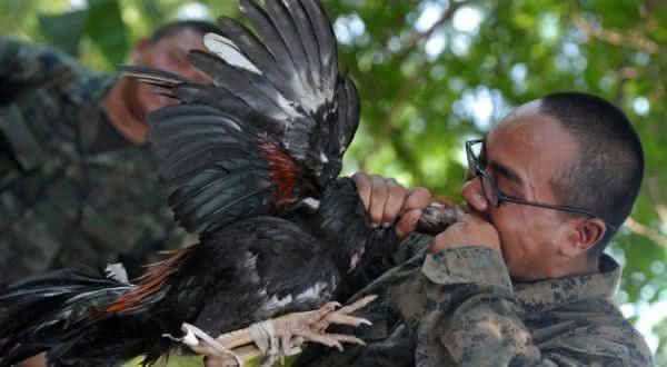 coquetel de cobra 2 entre os exercicios militares extremos