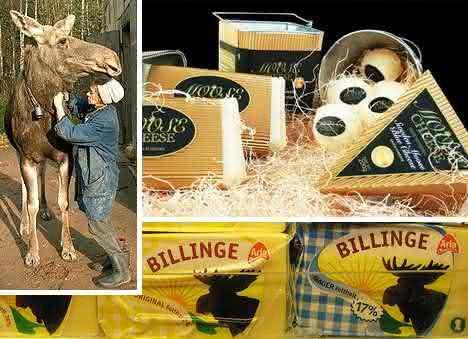elk house  entre os queijos mais caros do mundo