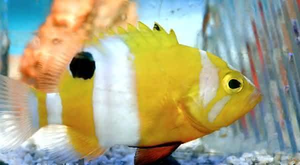 neptune entre os peixes mais caros do mundo