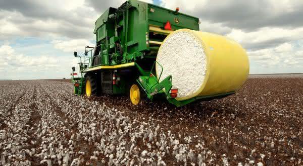 turquia entre os maiores paises produtores de algodao do mundo