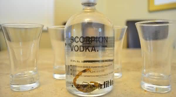 Scorpion Vodka entre as bebidas mais bizarras do mundo