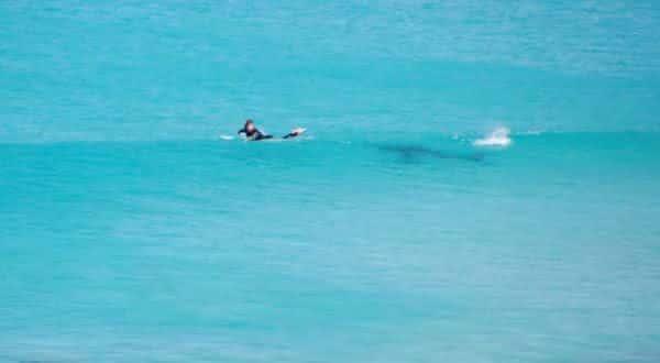 Australia Ocidental entre as aguas com mais tubaroes no mundo