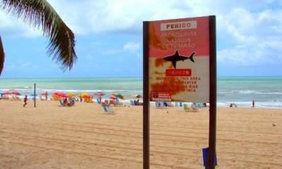 recife entre as aguas com mais tubaroes no mundo