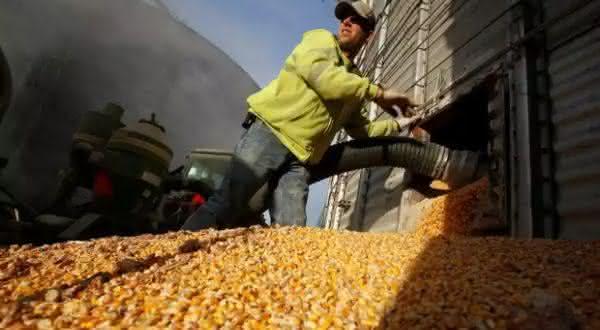 argentina entre os maiores exportadores de milho do mundo