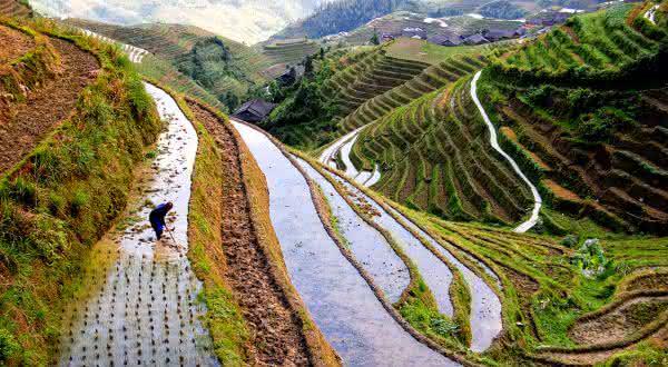 china entre os maiores exportadores de arroz do mundo
