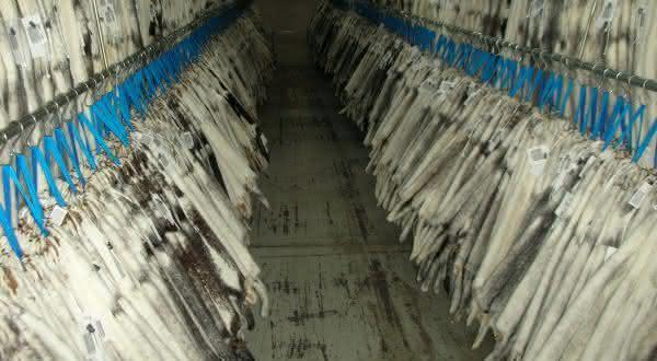 dinamarca entre os maiores exportadores de peixes do mundo