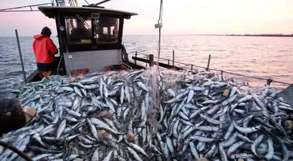 espanha entre os maiores exportadores de peixes do mundo
