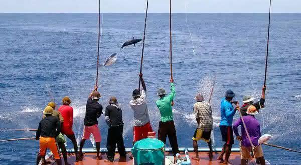 maldivas entre os maiores exportadores de peixes do mundo
