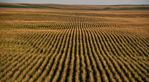 romenia entre os maiores exportadores de milho do mundo