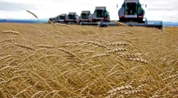 russia entre os maiores exportadores de milho do mundo