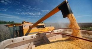servia entre os maiores exportadores de milho do mundo