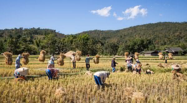 tailandia entre os maiores exportadores de arroz do mundo