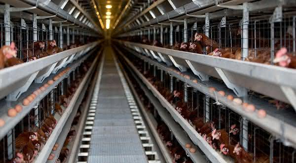 ucrania entre os maiores paises produtores de ovos do mundo