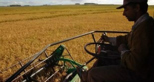 uruguai entre os maiores exportadores de arroz do mundo