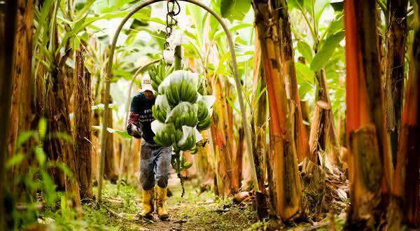 equador entre os maiores exportadores de frutas do mundo