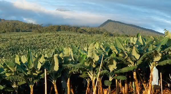 filipinas entre os maiores exportadores de frutas do mundo