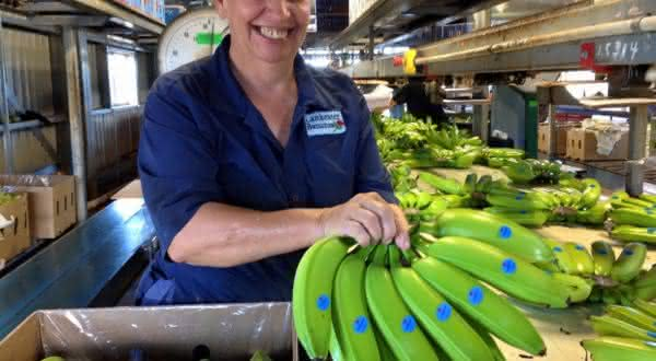 guatemala entre os maiores exportadores de frutas do mundo
