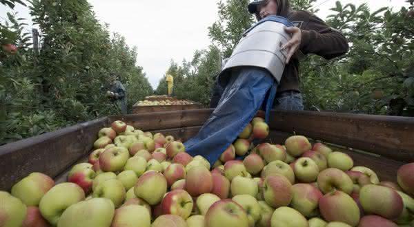 holanda entre os maiores exportadores de frutas do mundo