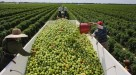 mexico entre os maiores exportadores de frutas do mundo