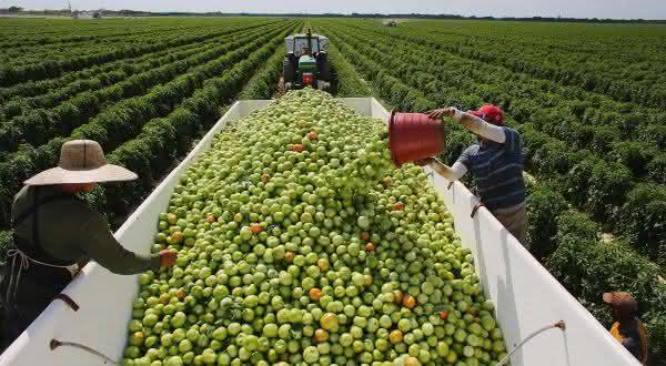 Top 10 maiores exportadores de frutas do mundo