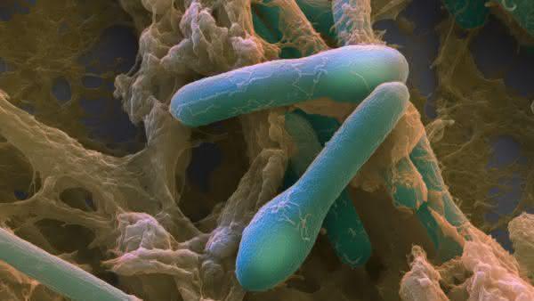 Clostridium Botulinum entre as bacterias mais perigosas do mundo
