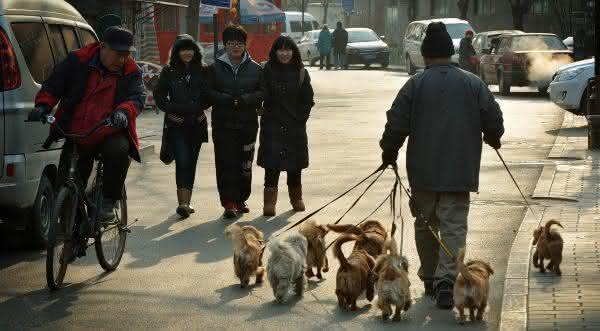 china entre os paises com mais caes no mundo