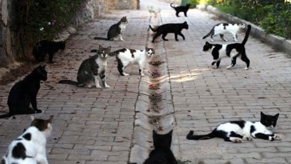 gato entre as maiores populacoes de mamiferos do mundo