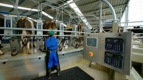 nova zelandia entre os maiores paises produtores de leite do mundo