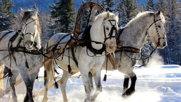 russia entre os paises com mais cavalos no mundo