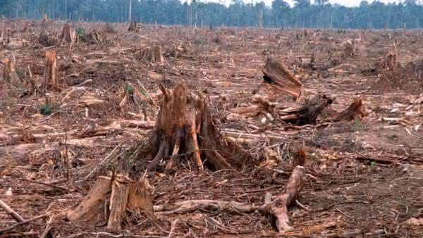 Guatemala entre os paises com maior taxa de desmatamento