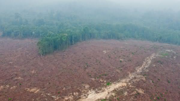Indonesia entre os paises com maior taxa de desmatamento