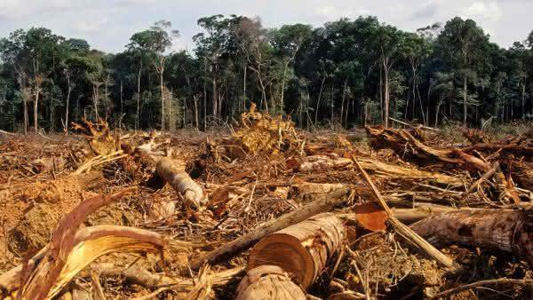 Portugal entre os paises com maior taxa de desmatamento