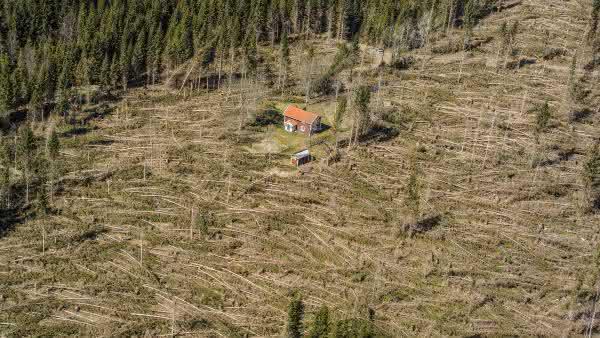 suecia entre os paises com maior taxa de desmatamento