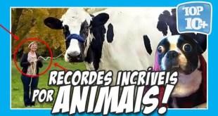 top 10 incriveis recordes feitos por animais