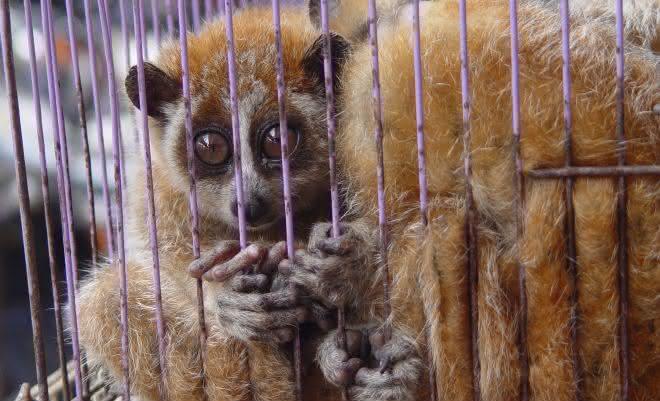 comercio de animais selvagens entre os crimes mais rentaveis do mundo