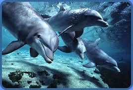 Delfines nariz de botella hermosas pero extremadamente peligrosas