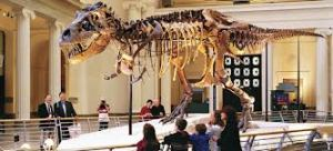 Museo Field de Historia Natural Top 10 mejores atracciones turísticas para visitar en Chicago.visitar chicago vacaciones en chicago los mejores hoteles de chicago atracciones turísticas para visitar en Chicago
