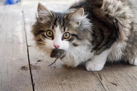 2 Datos curiosos sobre los gatos