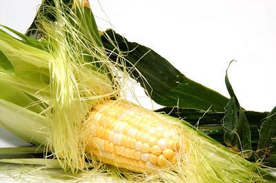 seda de maíz