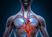 10 Maneras de Como Mejorar la Circulación de la Sangre