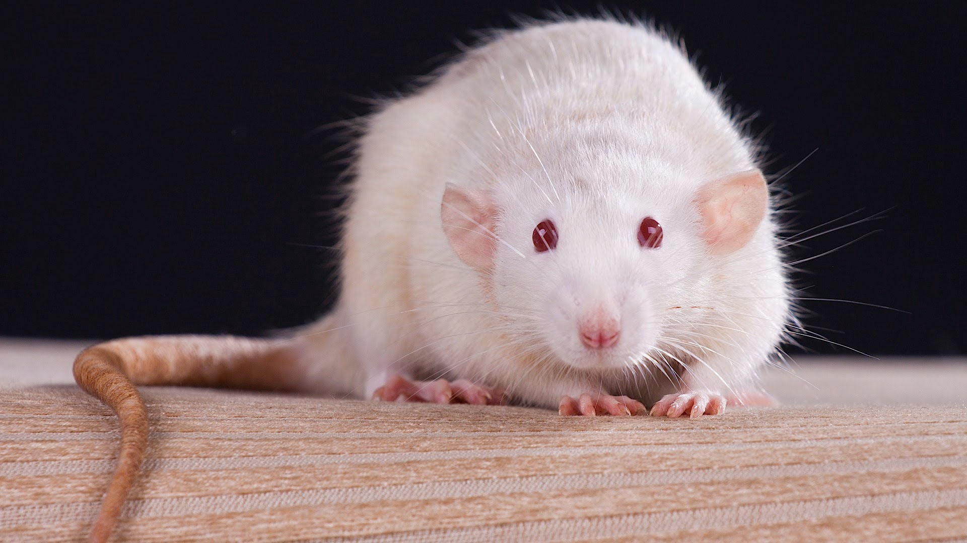 Top 10 Small Pets That are great to buy and care for Small ...