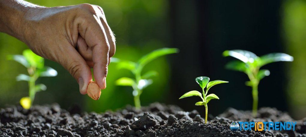 Planting The Seeds Or The Plant